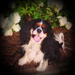 Lady Barks-a-Lot Photo